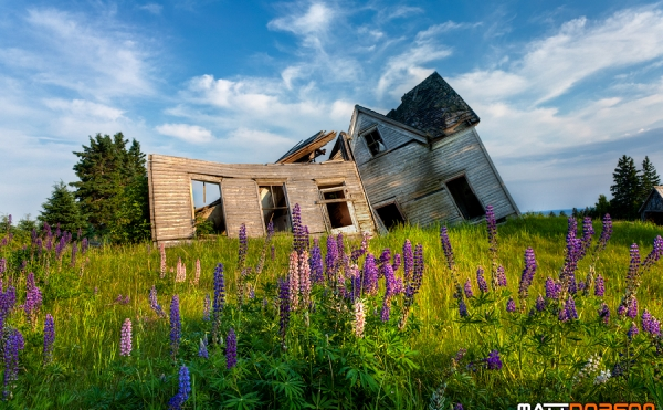 A dilapidated house in a field of lupins on PEI.  | How to decide between rebuilding, redesigning or refreshing your nonprofit's website